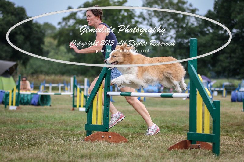 Bridgehouse Agility Club -2013