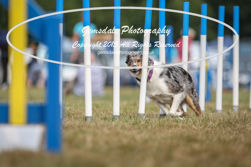 Bridgehouse Agility Club -3046