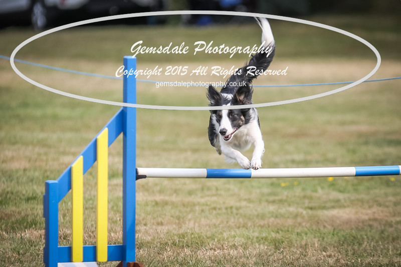 Bridgehouse Agility Club -3014