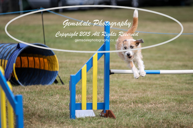 Bridgehouse Agility Club -3009