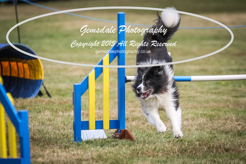 Bridgehouse Agility Club -3005
