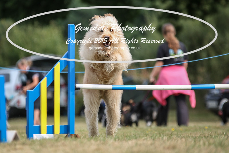 Bridgehouse Agility Club -3027
