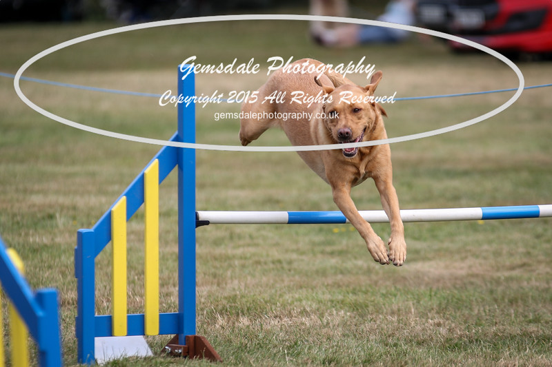 Bridgehouse Agility Club -3001