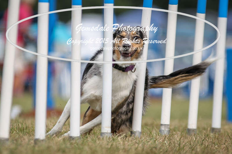 Bridgehouse Agility Club -3045