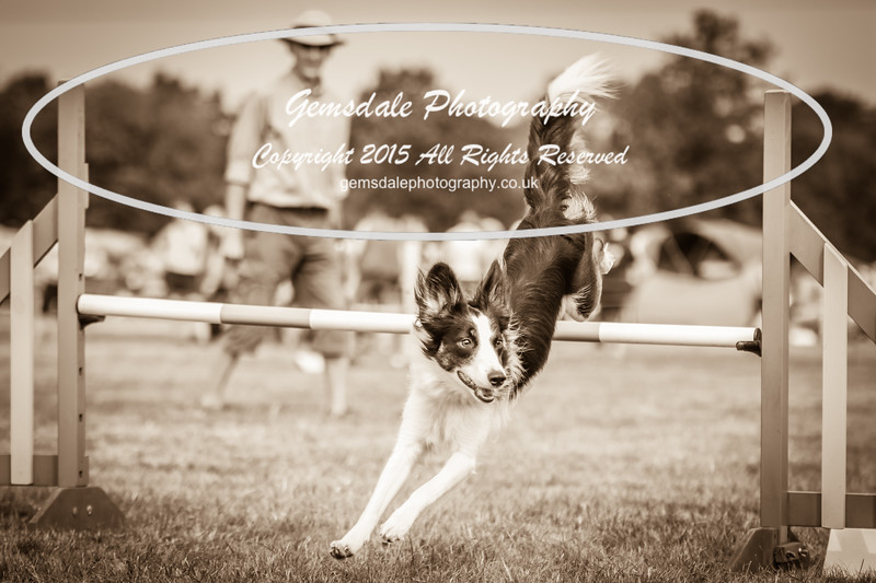 Bridgehouse Agility Club -3018