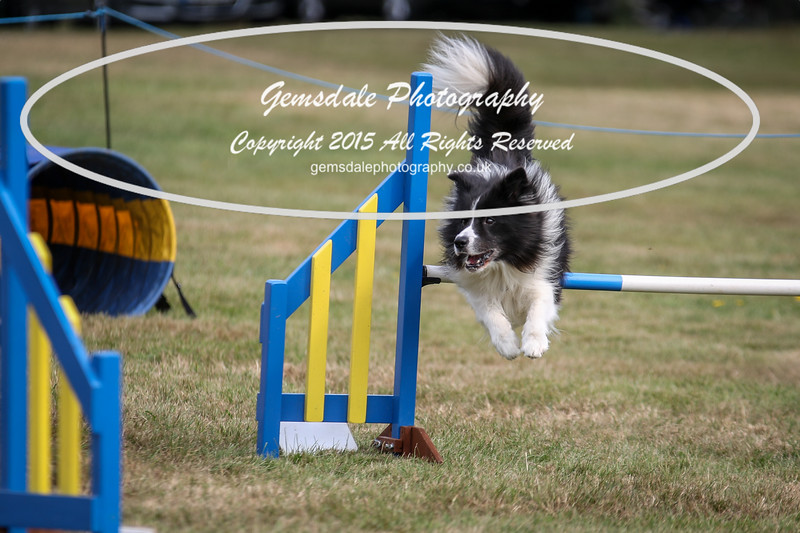 Bridgehouse Agility Club -3004