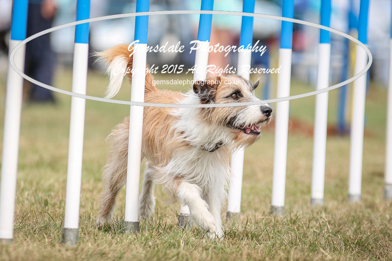 Bridgehouse Agility Club -3011