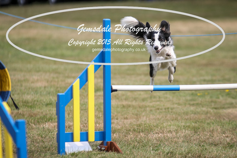 Bridgehouse Agility Club -3013