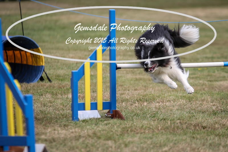 Bridgehouse Agility Club -3003