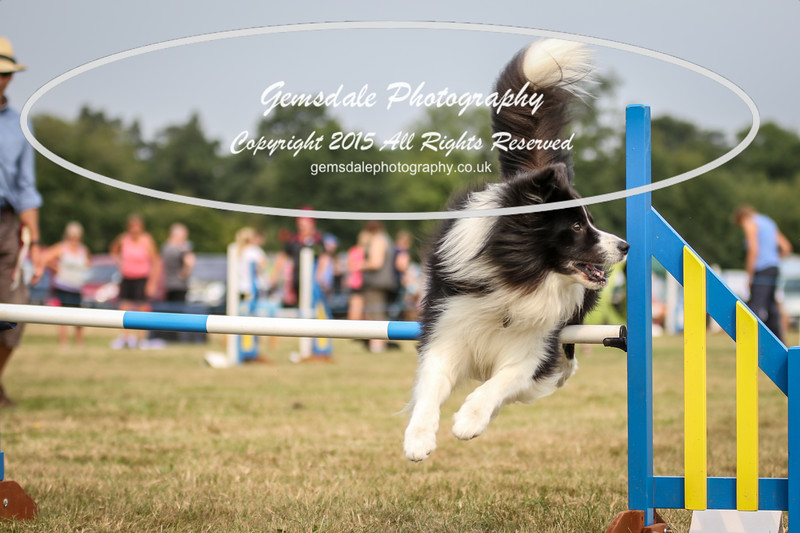Bridgehouse Agility Club -3007