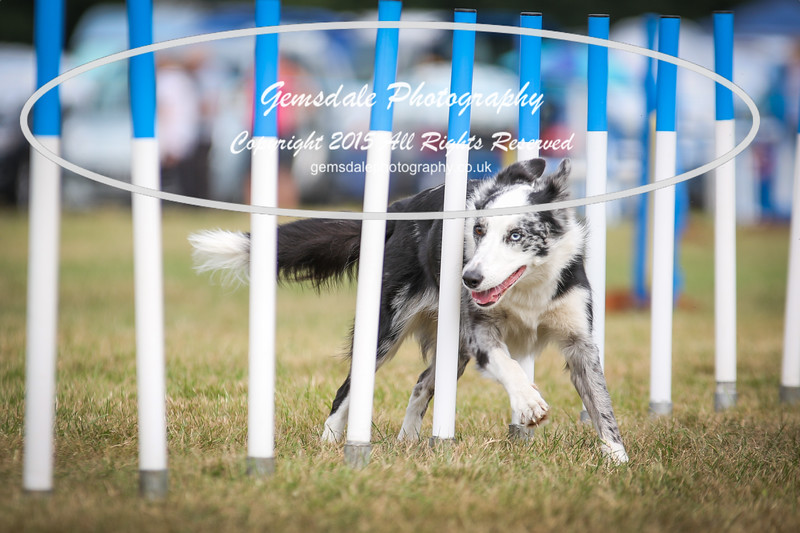 Bridgehouse Agility Club -3024