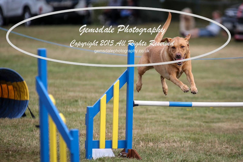 Bridgehouse Agility Club -3000