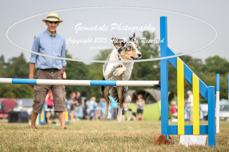 Bridgehouse Agility Club -3036