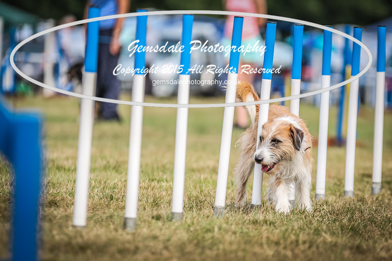 Bridgehouse Agility Club -3010