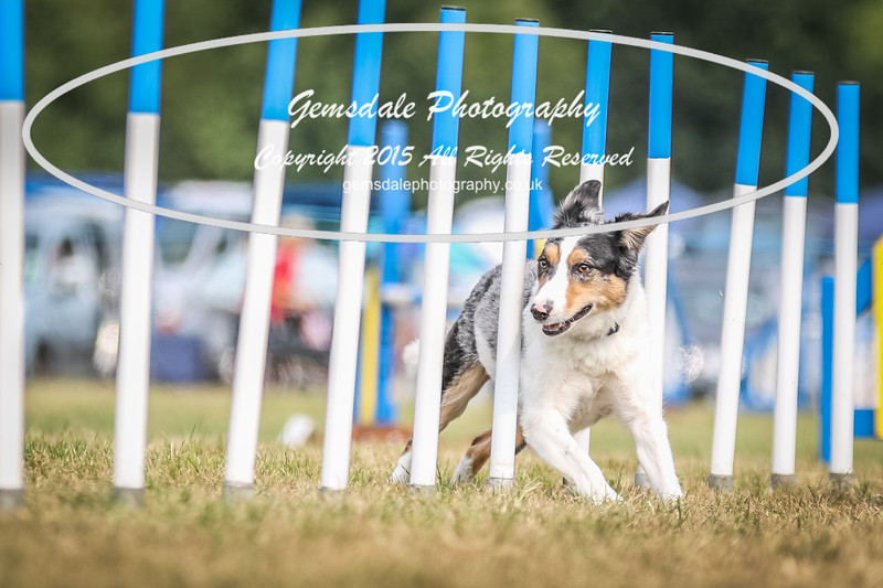 Bridgehouse Agility Club -3034