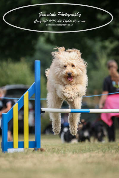 Bridgehouse Agility Club -3028