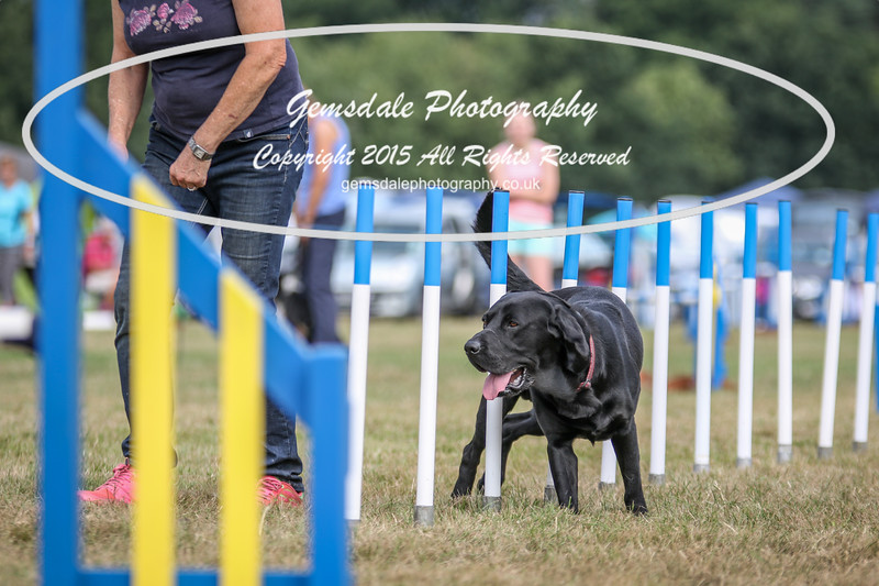 Bridgehouse Agility Club -3022
