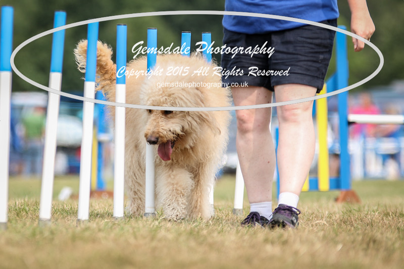 Bridgehouse Agility Club -3029