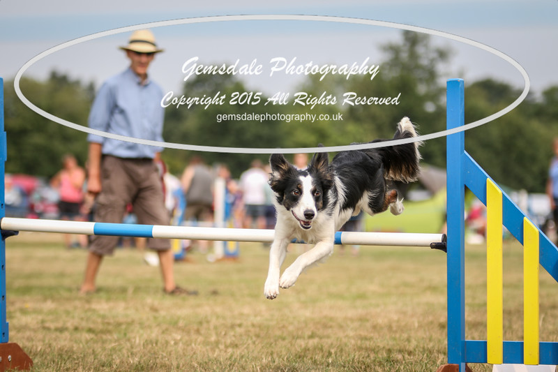 Bridgehouse Agility Club -3017
