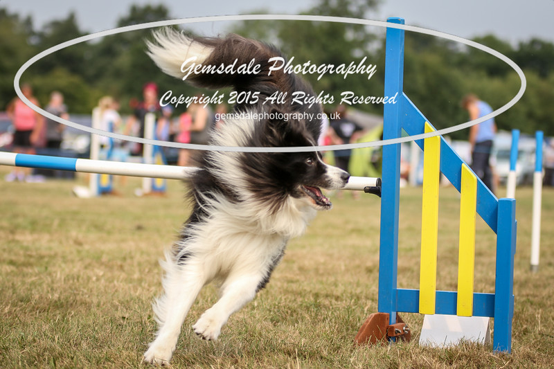 Bridgehouse Agility Club -3008