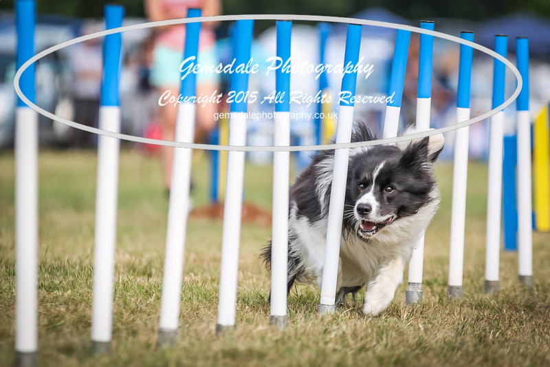 Bridgehouse Agility Club -3006