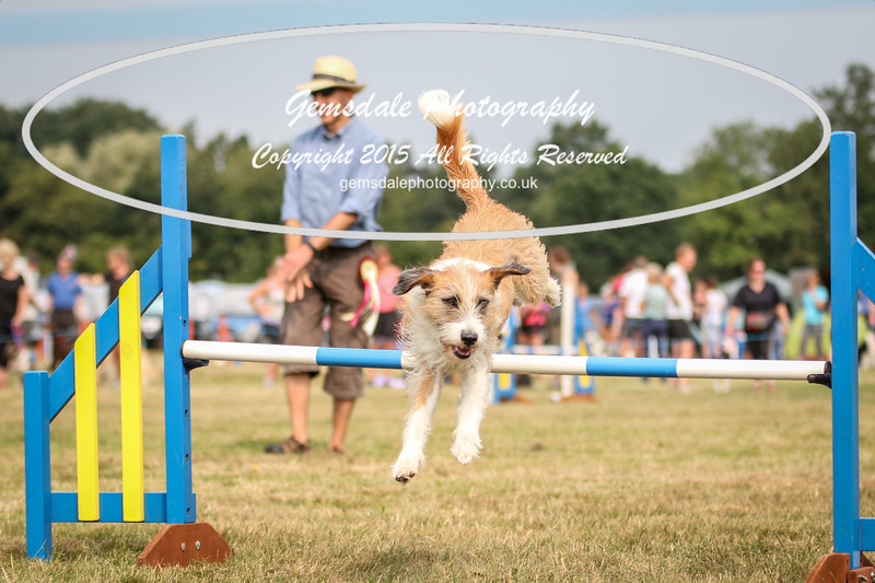 Bridgehouse Agility Club -3012