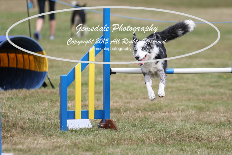 Bridgehouse Agility Club -3023