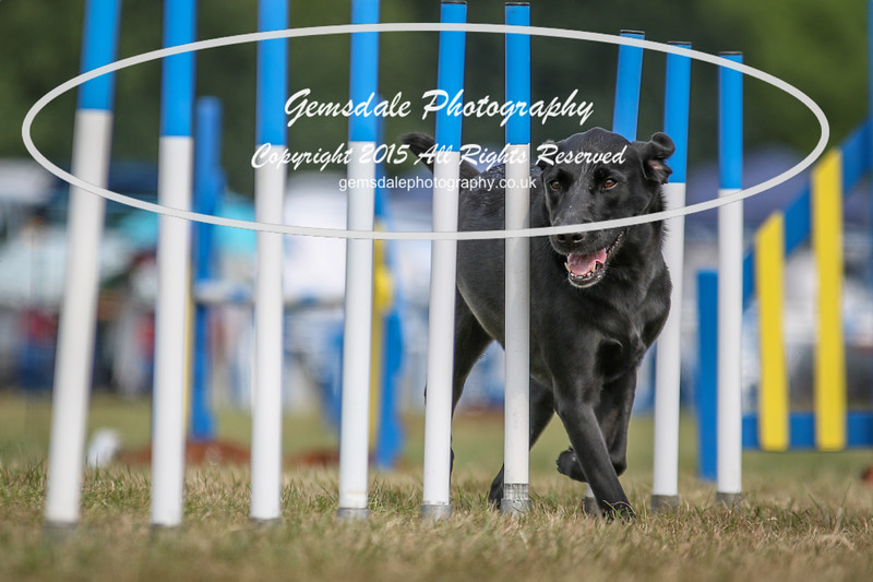 Bridgehouse Agility Club -3041