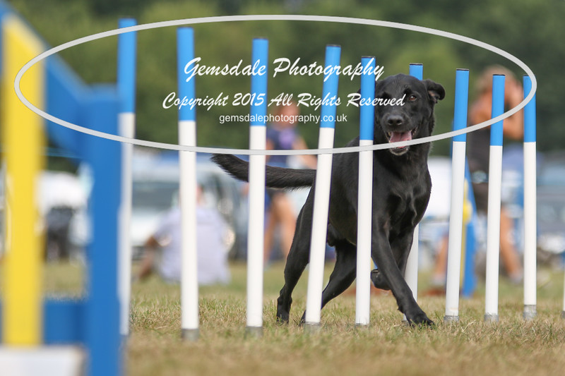 Bridgehouse Agility Club -3042