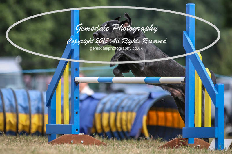Bridgehouse Agility Club -3038