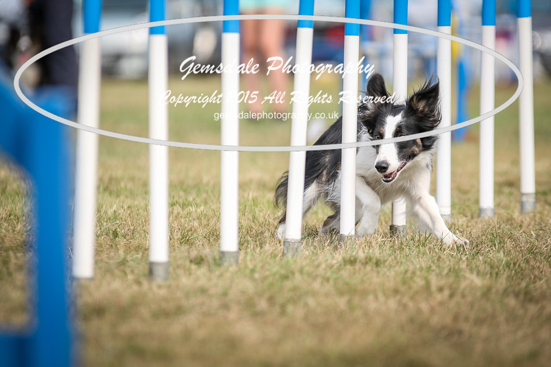 Bridgehouse Agility Club -3016