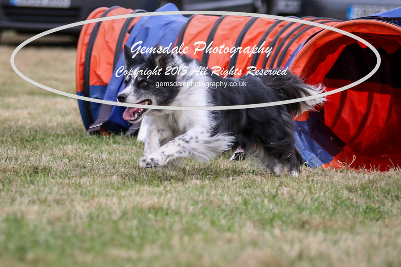 Bridgehouse Agility Club -4032