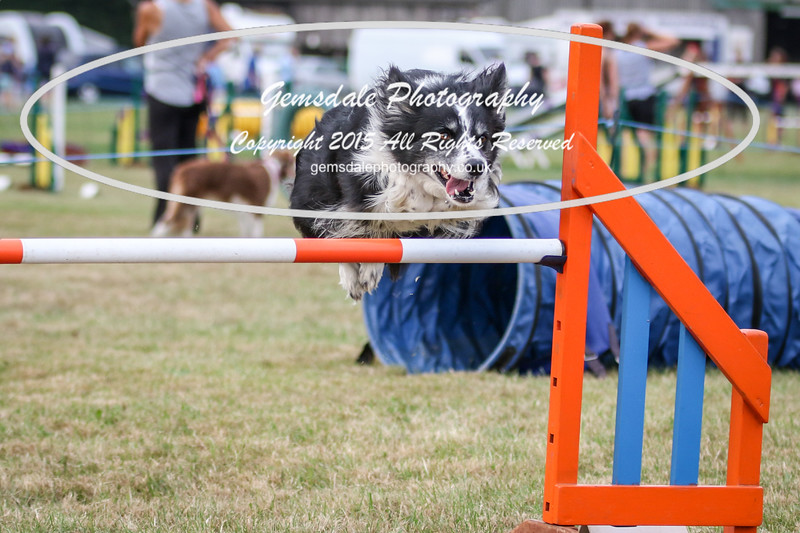 Bridgehouse Agility Club -4029