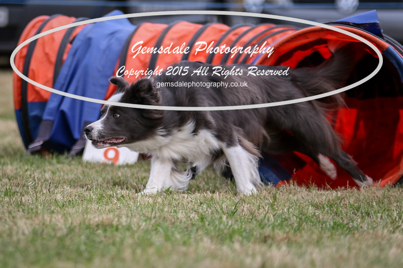 Bridgehouse Agility Club -4015