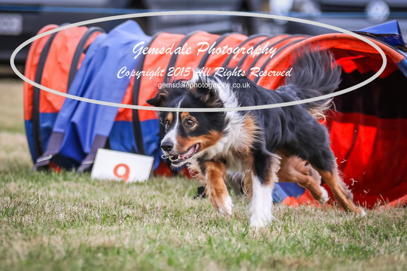 Bridgehouse Agility Club -4026