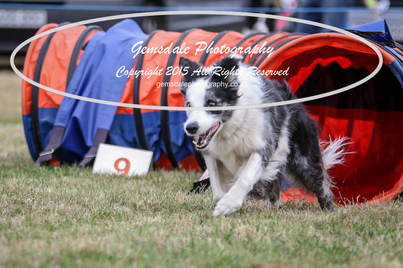 Bridgehouse Agility Club -4040