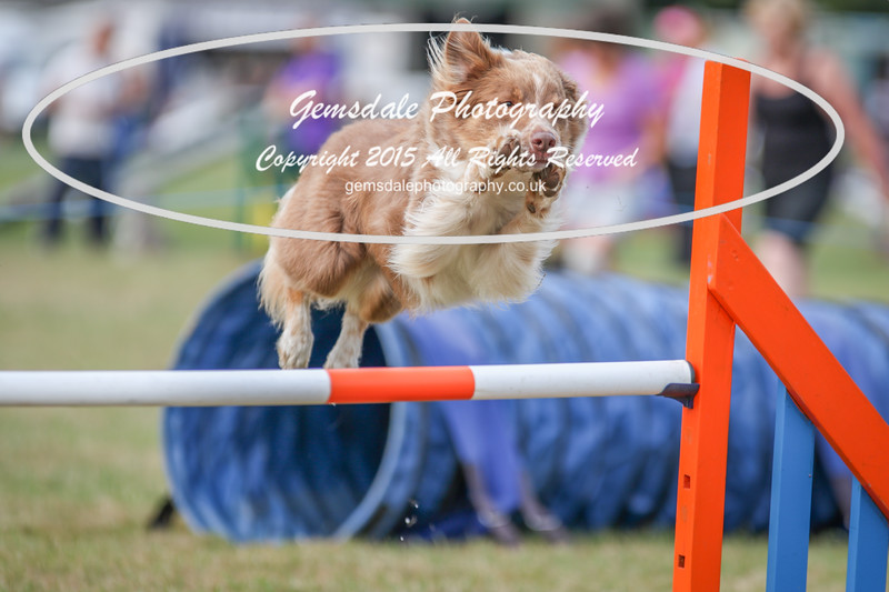 Bridgehouse Agility Club -4001
