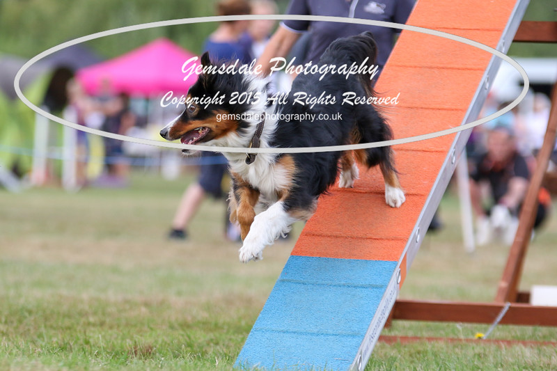Bridgehouse Agility Club -4023