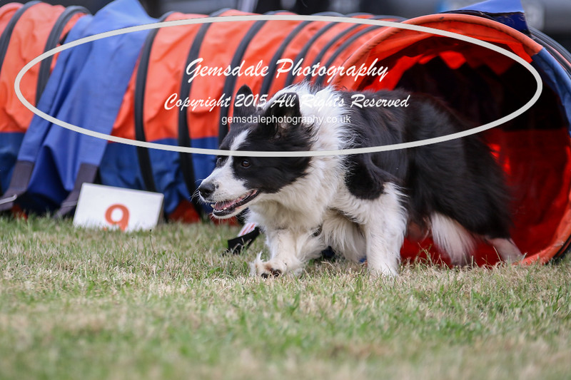 Bridgehouse Agility Club -4021