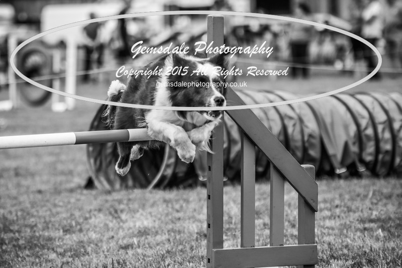 Bridgehouse Agility Club -4014