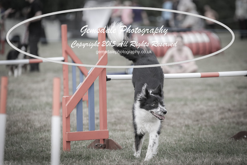 Bridgehouse Agility Club -4047