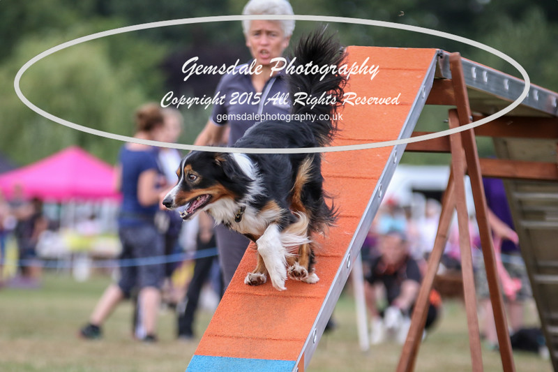 Bridgehouse Agility Club -4022