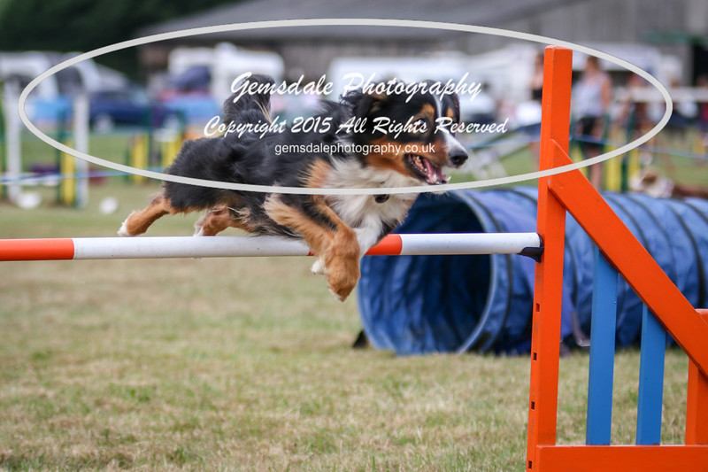 Bridgehouse Agility Club -4024