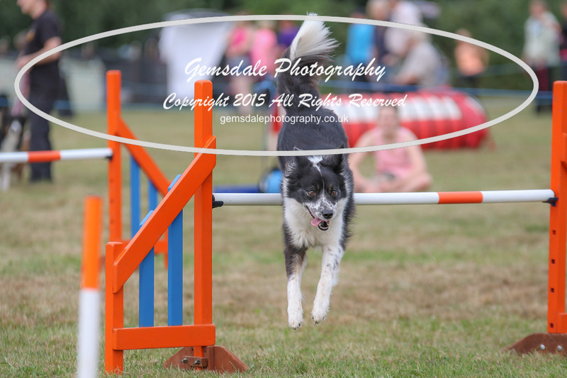 Bridgehouse Agility Club -4046