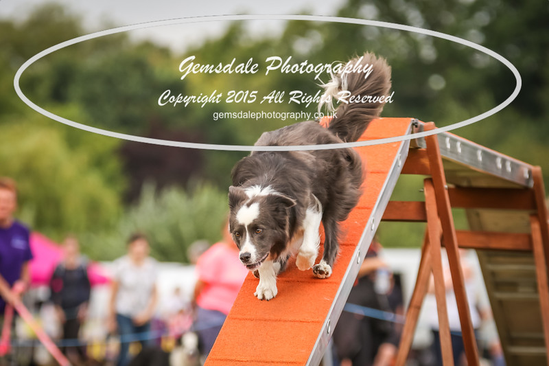 Bridgehouse Agility Club -4013