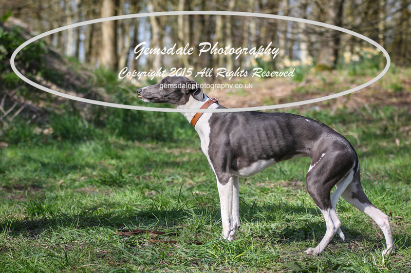 Paws at Play March 25th 2017-3031