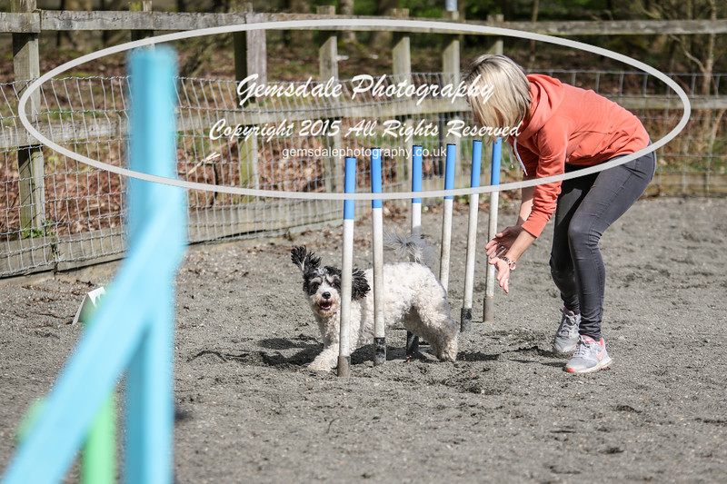 Paws at Play March 25th 2017-5071