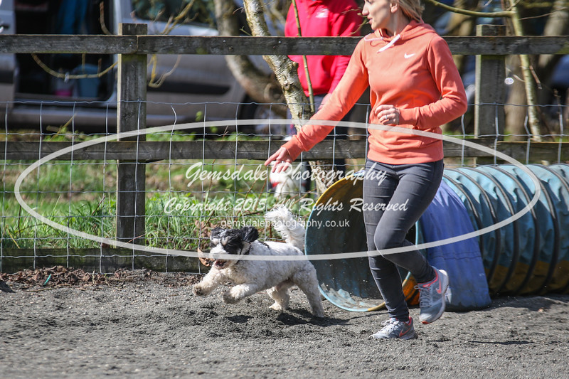 Paws at Play March 25th 2017-5015