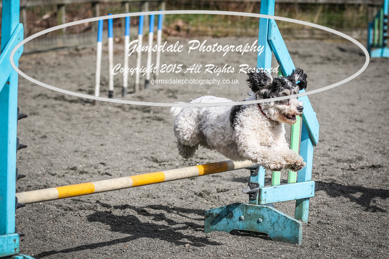 Paws at Play March 25th 2017-5074