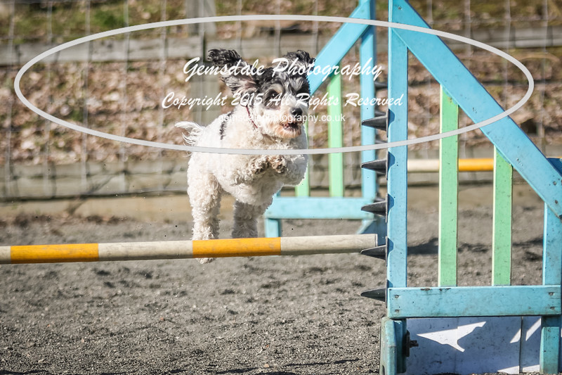 Paws at Play March 25th 2017-5097